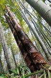 Les pousses de bambou trés hautes Image stock