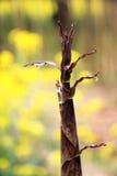 Pousses de bambou non reliées à la terre au printemps photographie stock