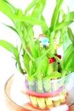 Pousses de bambou sacrées Images stock
