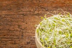 Pousses de broccoli et de trèfle Image stock