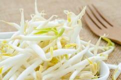 Pousses de fèves de mung dans la tasse blanche Images stock
