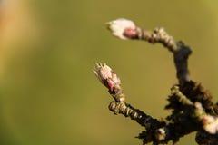 Pousses de fleur Photo libre de droits