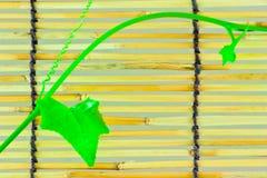 Pousses de lierre sur les abat-jour en bambou japonais Photographie stock libre de droits