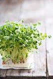 Pousses de radis fraîches et vertes Photos libres de droits