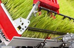 Pousses de riz Images stock