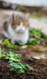Pousses de salade Images libres de droits