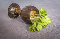 Pousses de tournesol dans la tasse Image stock