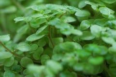 Pousses de vert de l'usine. Images libres de droits