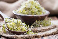 Pousses fraîches de broccoli Images libres de droits