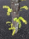 Pousses vert clair d'arbre Photographie stock libre de droits