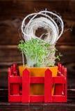 Pousses vertes, pots de tourbe, fil rugueux dans la boîte rouge Atterrissage de jeune plante Image libre de droits