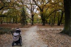 Poussette en parc, automne d'or photos stock