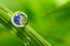 Poussez des feuilles avec des gouttelettes de pluie - concept de la terre de récupération images libres de droits