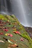 Poussez des feuilles sur une roche couverte dans la mousse de cascade Photographie stock libre de droits