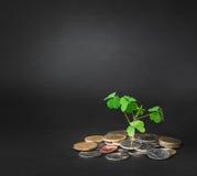 Poussez l'élevage de l'argent sur le fond noir, enregistrant l'escroquerie d'argent Images stock