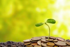 Poussez l'élevage du sol avec des pièces de monnaie d'argent sur le natur vert brouillé Photographie stock