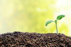 Poussez l'élevage du sol sur le fond naturel brouillé Image stock
