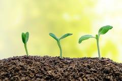 Poussez l'élevage du sol sur le fond naturel brouillé Photo stock