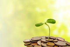 Poussez l'élevage sur des pièces de monnaie sur le fond naturel vert brouillé Image libre de droits