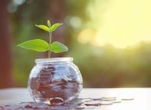 Poussez l'élevage sur la pile d'argent de la banque en verre de pot Photographie stock