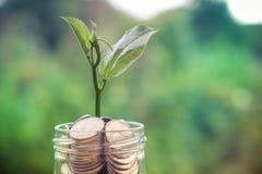 Poussez l'élevage sur la tirelire en verre dans le concept d'argent d'économie avec Photo stock