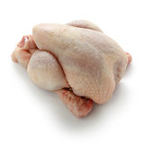 Poussin Stock Image