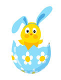 Poussin drôle de Pâques avec des oreilles de lapin dans un oeuf Images libres de droits