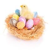 Oeufs et poussin de pâques dans le nid Photo stock