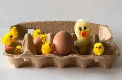 Poussins de Pâques avec des oeufs Photographie stock libre de droits