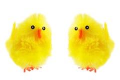 Poussins jaunes de Pâques Image libre de droits
