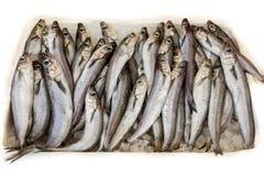 Poutassou des Blauen Wittlings oder Micromesistius fischt für Verkauf im griechischen Fischmarkt lizenzfreie stockfotos