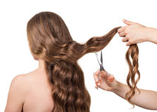 Poutchek hair and scissors in hands hairdresser isolated on white. royalty free stock images