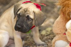 Pouting Sad Cute Puppy Outdoors Royalty Free Stock Photography