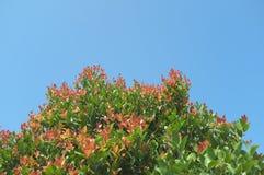 Pouvez vous sentir un arbre de floraison AUCUN 2 photographie stock libre de droits
