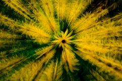 Pouvoir de marguerite Image libre de droits