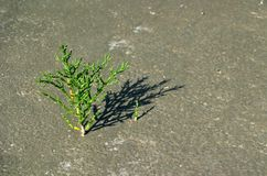 Pouvoir vert de pousse Image libre de droits