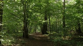 POV步行通过森林道路 股票视频