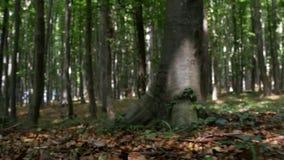 POV στην αγριότητα με ένα άτομο που τρέχει στο δάσος που φοβάται και τρομοκρατεί απόθεμα βίντεο