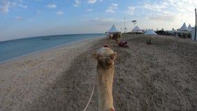 Οδήγηση μιας καμήλας απόθεμα βίντεο
