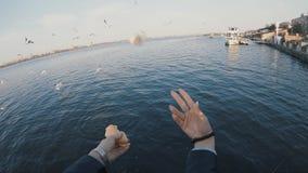 POV, бросая кусок хлеба для питаться птицы собирается, замедленное движение видеоматериал