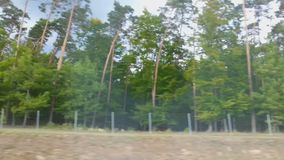 POV пассажира автомобиля или шины смотря ландшафт обочины через окно сток-видео
