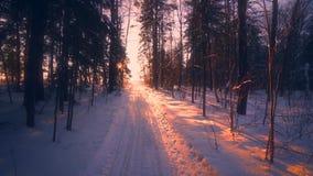 Pov снял медленно двигая проходить на окруженный путь сельской местности заходом солнца леса зимы изумляя сток-видео