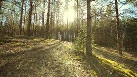 POV 走通过森林,平稳的凸轮射击 股票录像