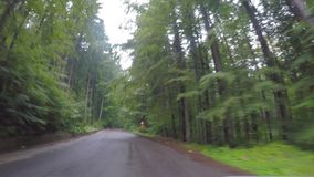 POV of amazing green forest landscape seen from car window traveling on wood road beauty in nature -. POV of amazing green forest landscape seen from car window stock footage