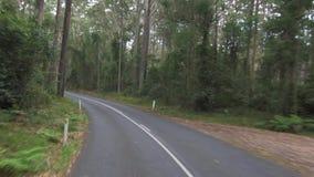 POV conduisant par le chemin forestier, parc national de Murramarang, Australie banque de vidéos