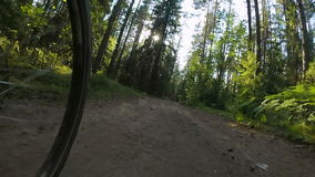POV cycling in a summer forest stock video footage