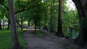 POV de la persona que camina en un callejón en un parque del árbol de ciprés almacen de video