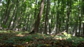 POV in der Wildnis mit einem Mann, der in den Wald geht, erschrak und erschrickt stock video