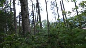 POV en la naturaleza salvaje que camina en una trayectoria de la monta?a en bosque almacen de video