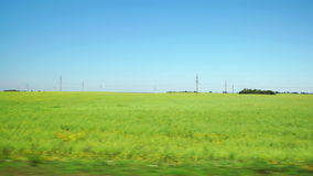 POV: Fast Moving along a light green field in Altai, Russia. POV: Fast Moving along light green field in Altai, Russia stock video footage